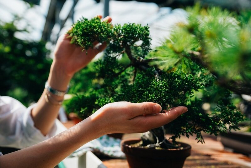 Bonsai For Beginners Where To Start Green And Prosperous