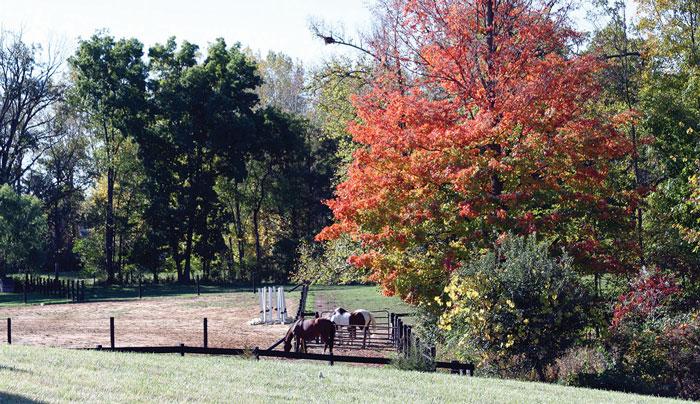 sylvanrunsanctuary_horses.jpg