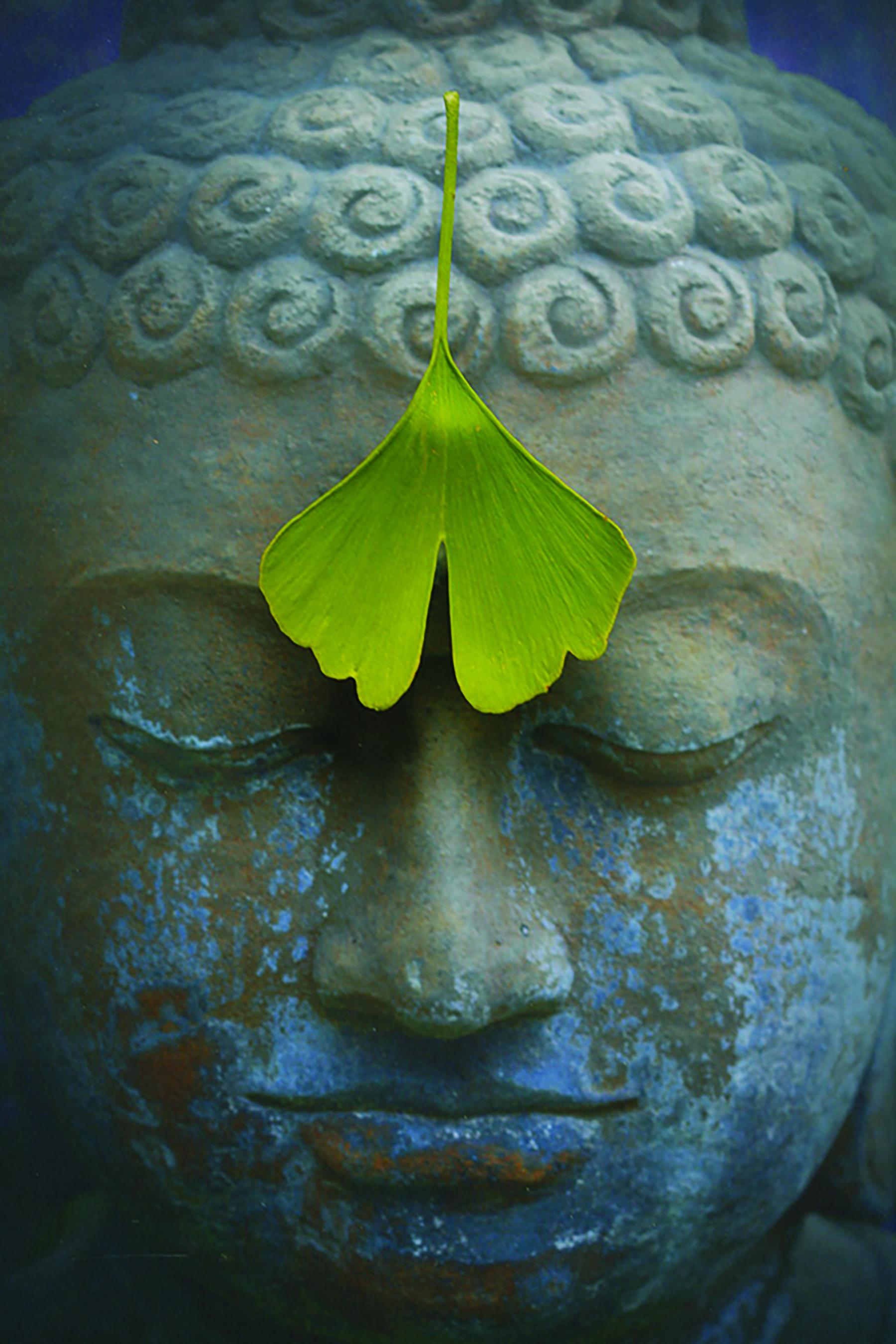 buddha-2728793_1920-header.jpg