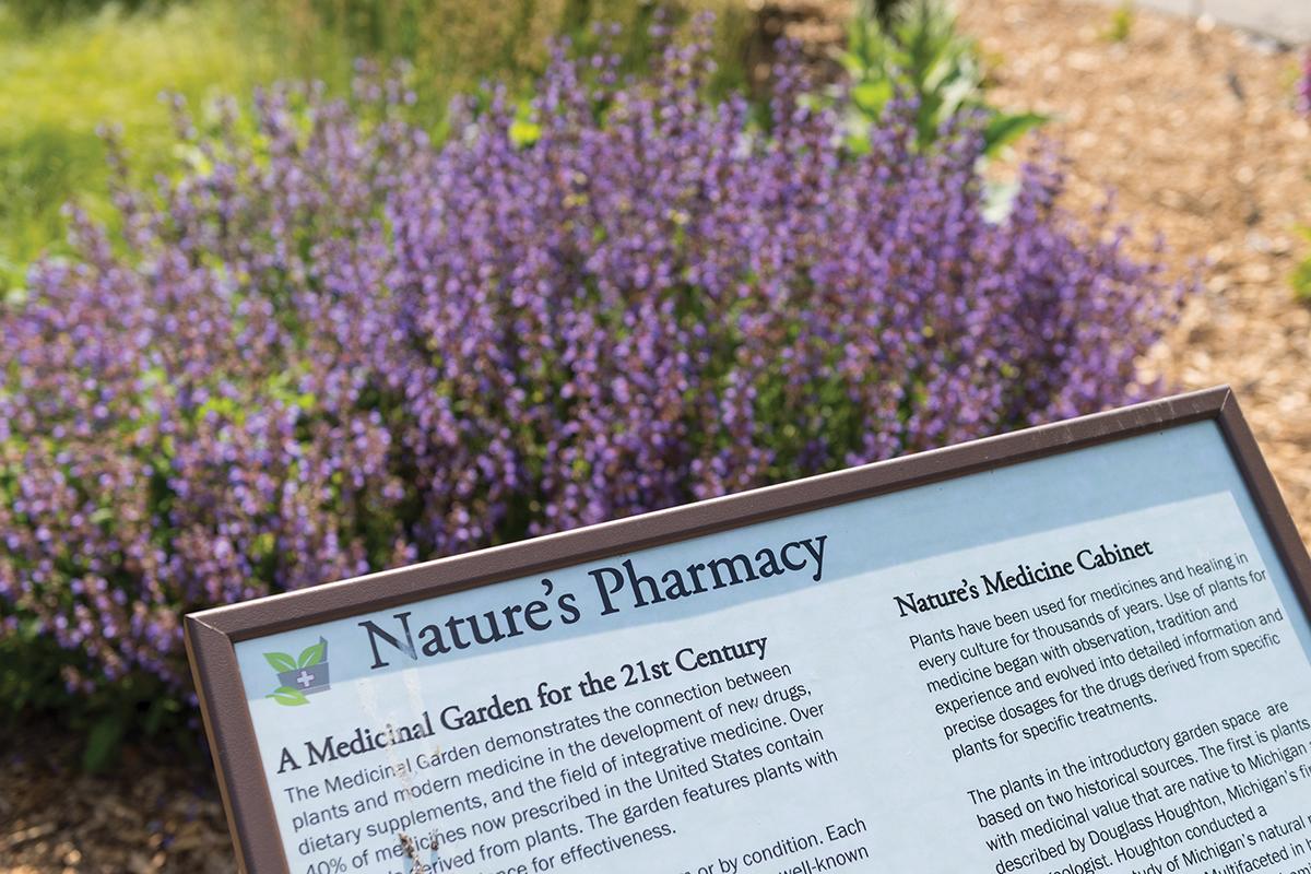 Medicinal Garden-Matthaei-1.jpg