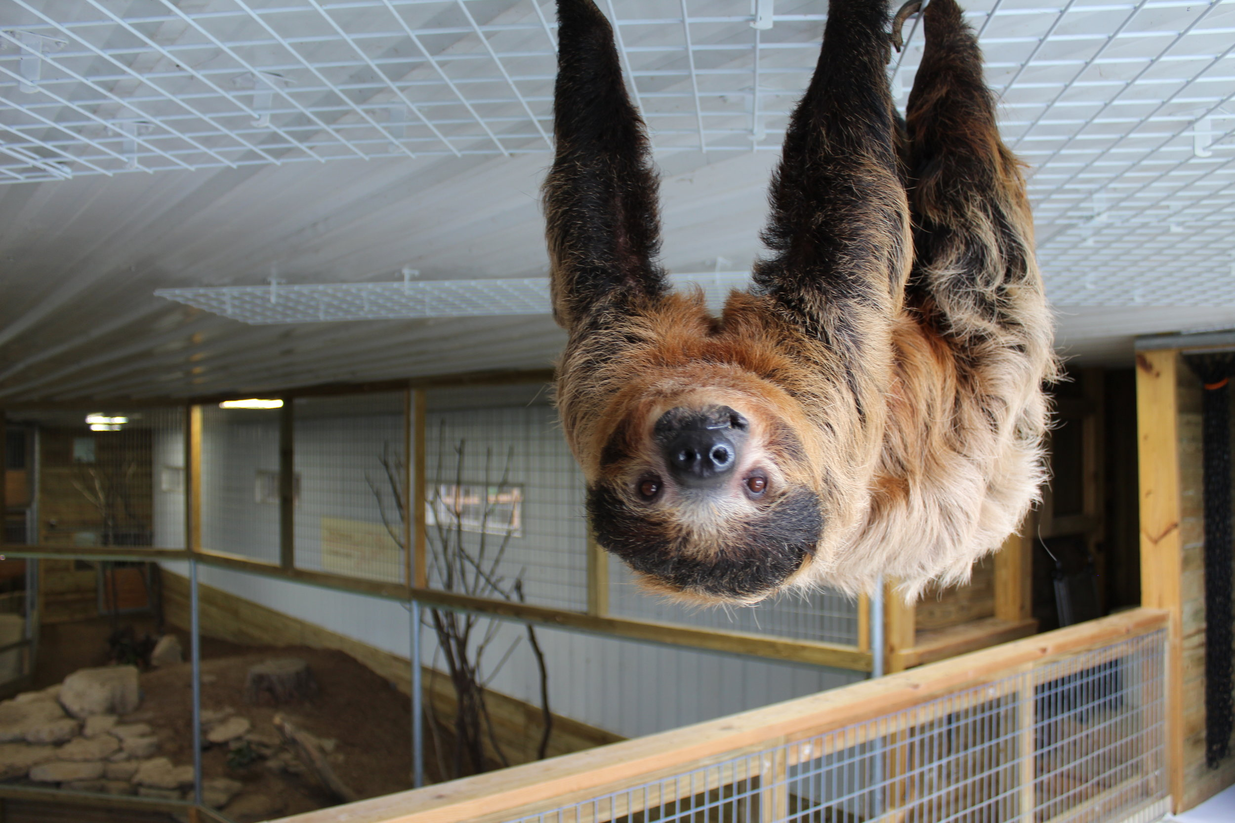 creature-conserve-sloth.JPG