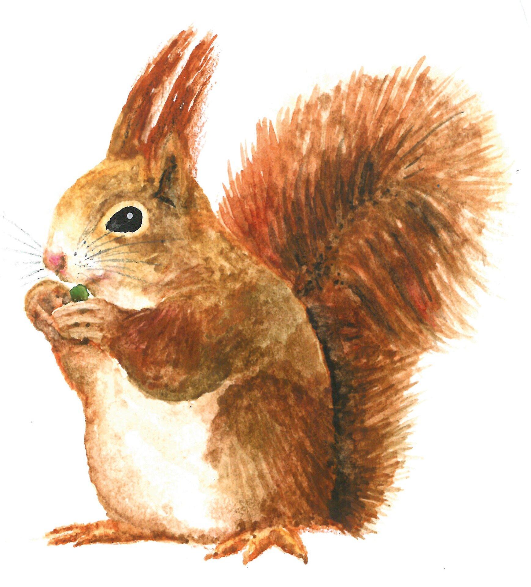 squirrel-3052846_1920.jpg