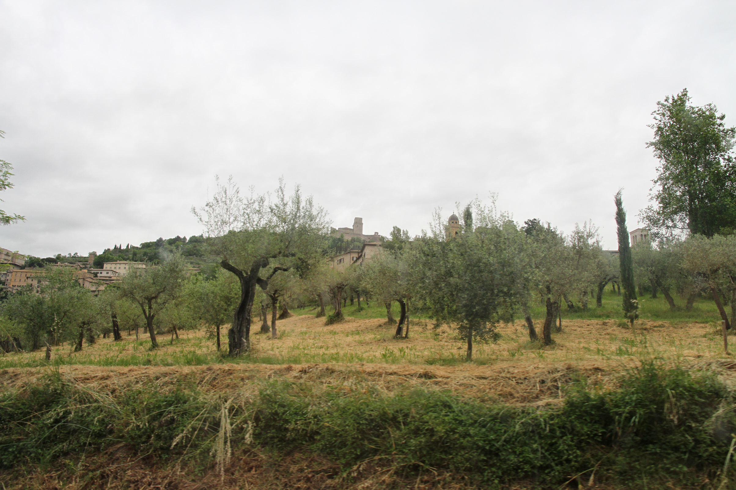Olive Grove, Assisi