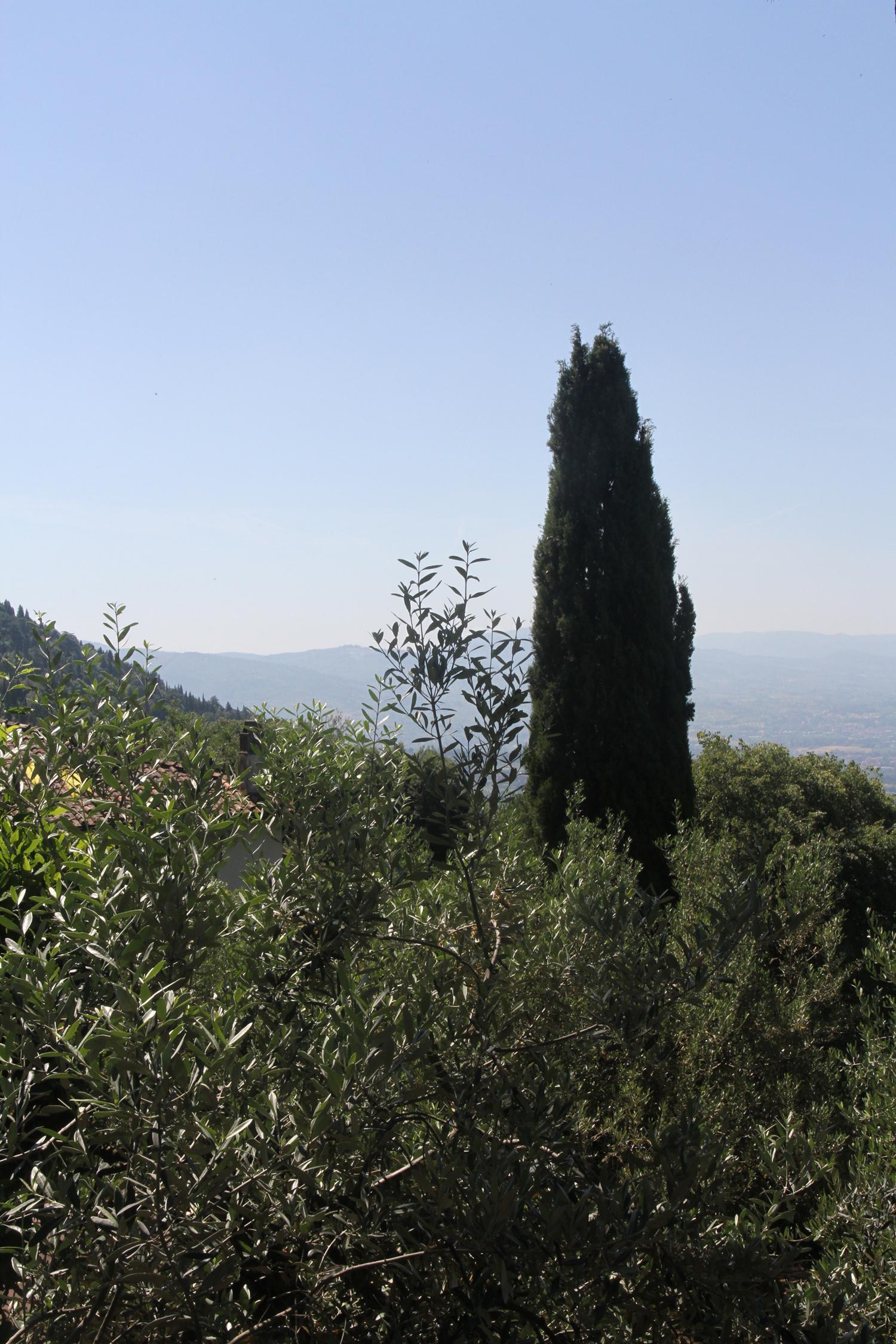 Cypress Tree, Fiesole