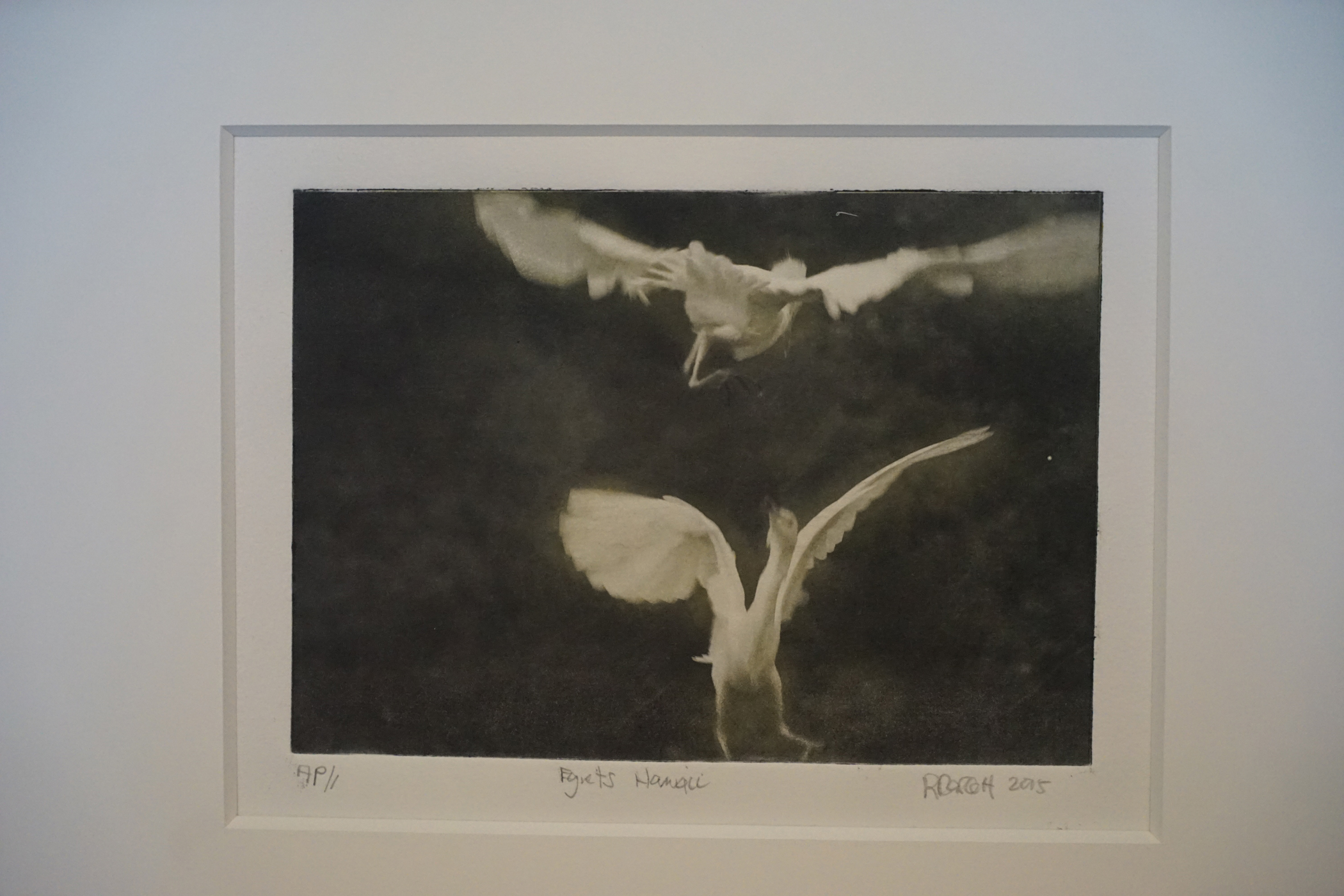 Egrets Hawaii 2010