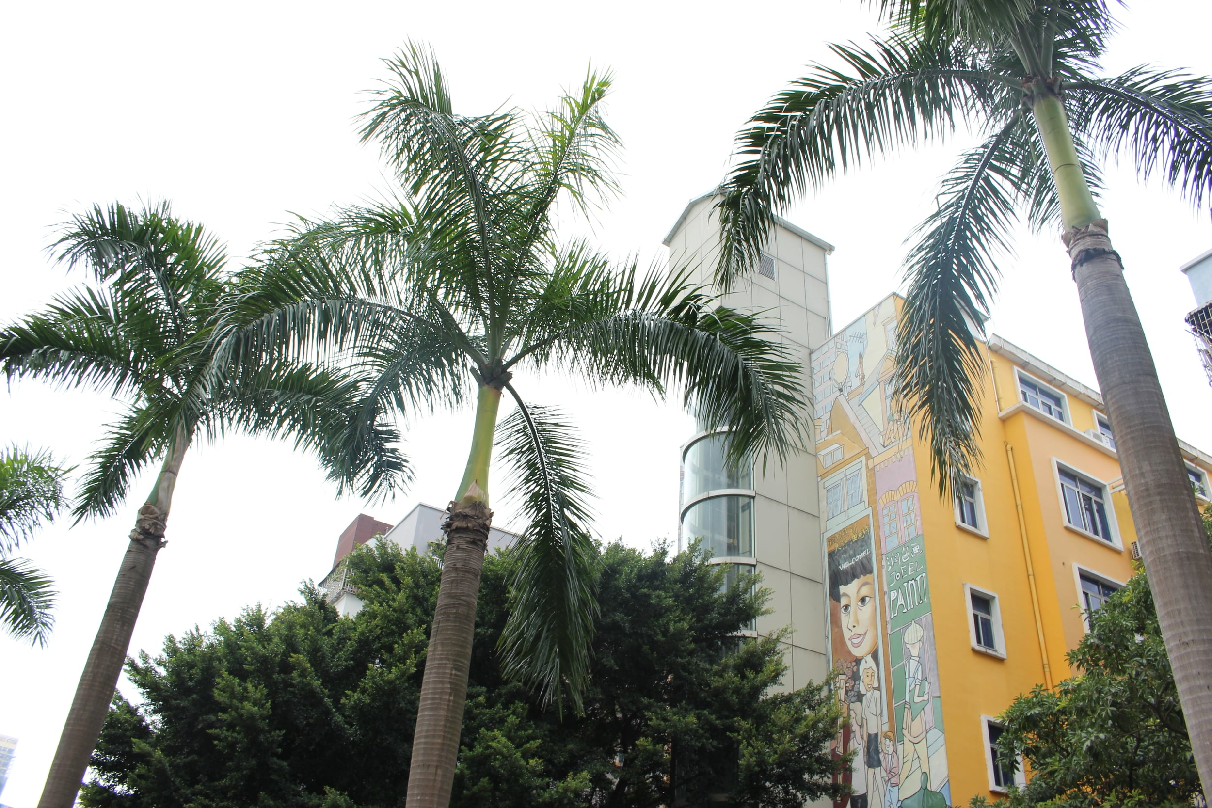 Lots of palm trees in south China
