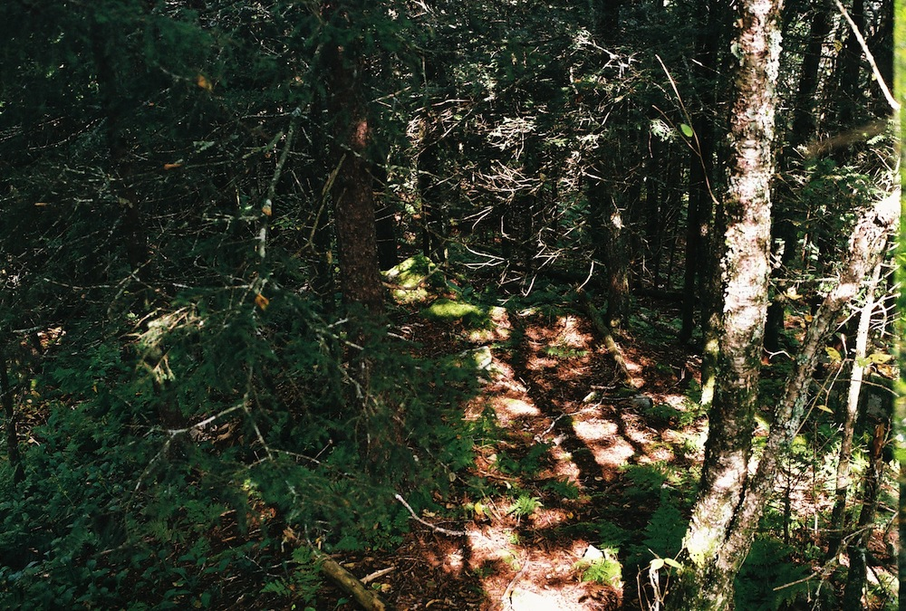2013, Smoky Mountain National Park Appalachian Trail from Newfound Gap Nikkormat