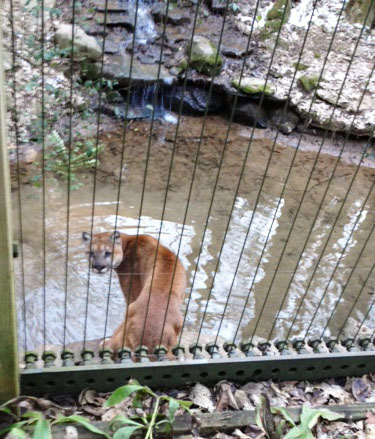 This zoo had so many large and wild cats! Perfect for cat lovers like ourselves!