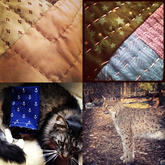 1) Been working on this, my biggest and most quilted, quilt for several months. 2) Some holiday goodies were quilted. 3) Flounder lends a hand sorting the stash. 4) A lynx looks on at the Nashville Zoo.