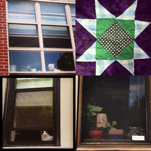 1) Eager Watcher Dog. 2) New work. 3) Pretty stoic in Park Slope. 4) Pretty sneaky on 8th Ave.