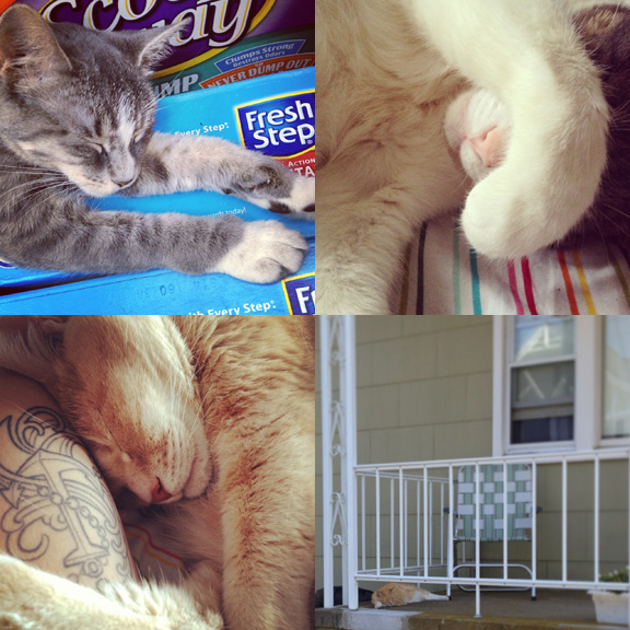 "1) Bodega kittens need their rest. 2) Bippi's over Summer. 3) Tom's classic ""diver"". 4) Beach cats have it best."