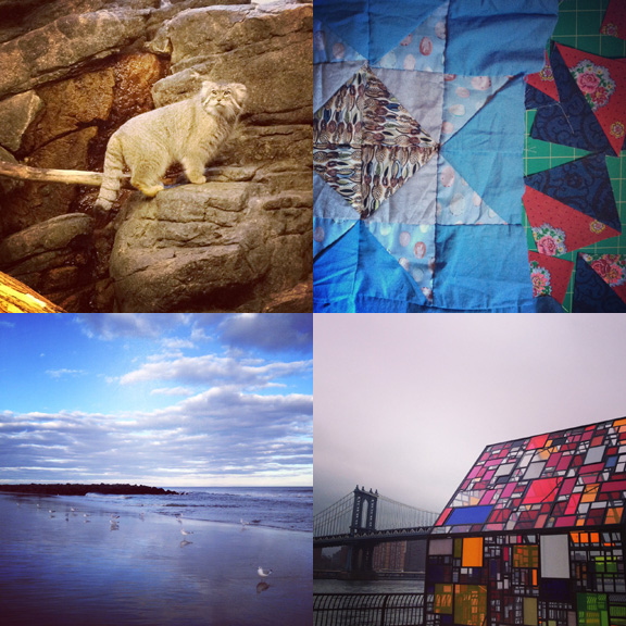 1) One of our favorite  kitties.  2) HST madness. 3) Lovely day Down The Shore. 4) Glass houses in Brooklyn.