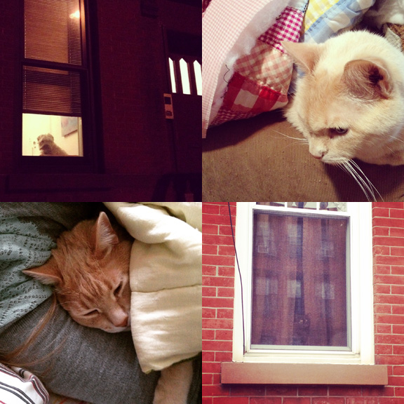 1) Night watcherdog. 2) Pit is staying bundled for now. 3) Tom, too. 4) Watchercats are rare, elusive and mysterious!