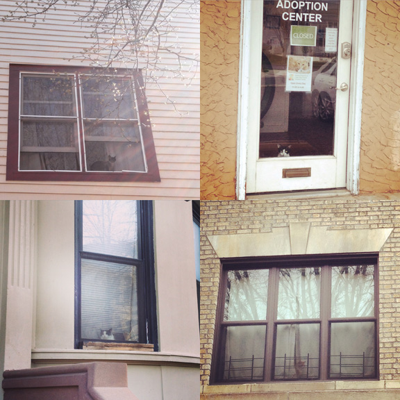 1) Olin Street, Ocean Grove, NJ. 2) West Cape May, NJ. 3) 8th Street, Park Slope. 4) 8th Ave, Park Slope.