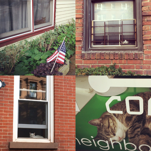 1) Happy fourth on Olin St. 2) Sneaking a peak in Prospect Heights. 3)Just chilling in South Slope. 4) Copy cat on 7th Ave.