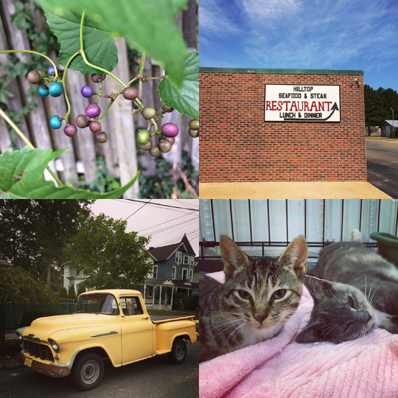 1) Porcelain berries in the backyard. 2) Hilltops in Red Level, AL. 3) Yellow beasts in Asbury Park. Cuties wrapped in Pink.