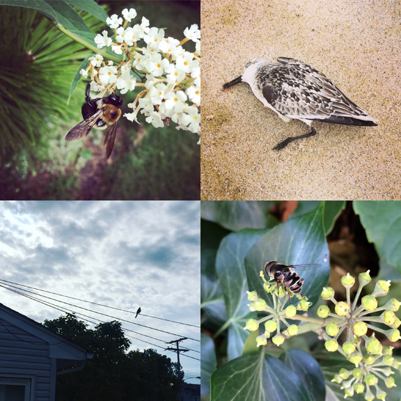 1) Jersey bee. 2) After the storm. 3) Bird on a wire. 4) Brooklyn bee.