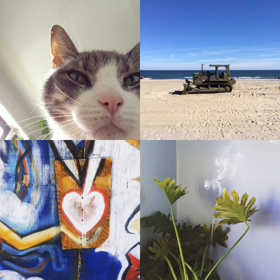 1) My morning view. 2) Sand toys. 3) Brooklyn says goodbye. 4) New growth.