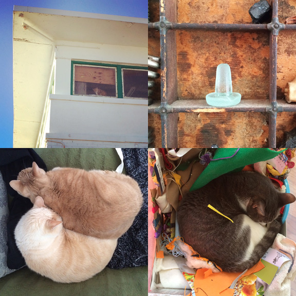 1) Boardwalk #watchercat. 2) Our first bottle stopper (found in December but now displayed). 3) Piles of cats and... 4) ...cats in piles.