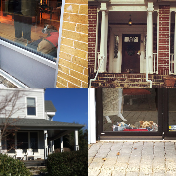 1) Suspicious shopdog. 2) Brick colored porchcat. 3) Sunbathed porchcat. 4) Cozy shopdog.