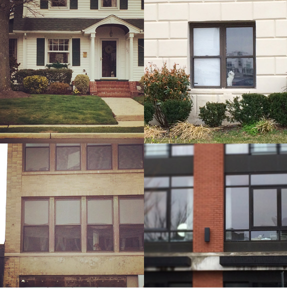 1) Ritzy neighborhood #watcherdog. 2) Apartment #watchercat. 3) City dog one... 4) ...and two.