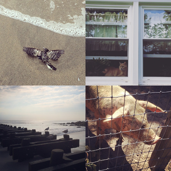 1) A perfect angel. 2) My #watchercat. 3) new morning rituals. 4) Exploring our surroundings.