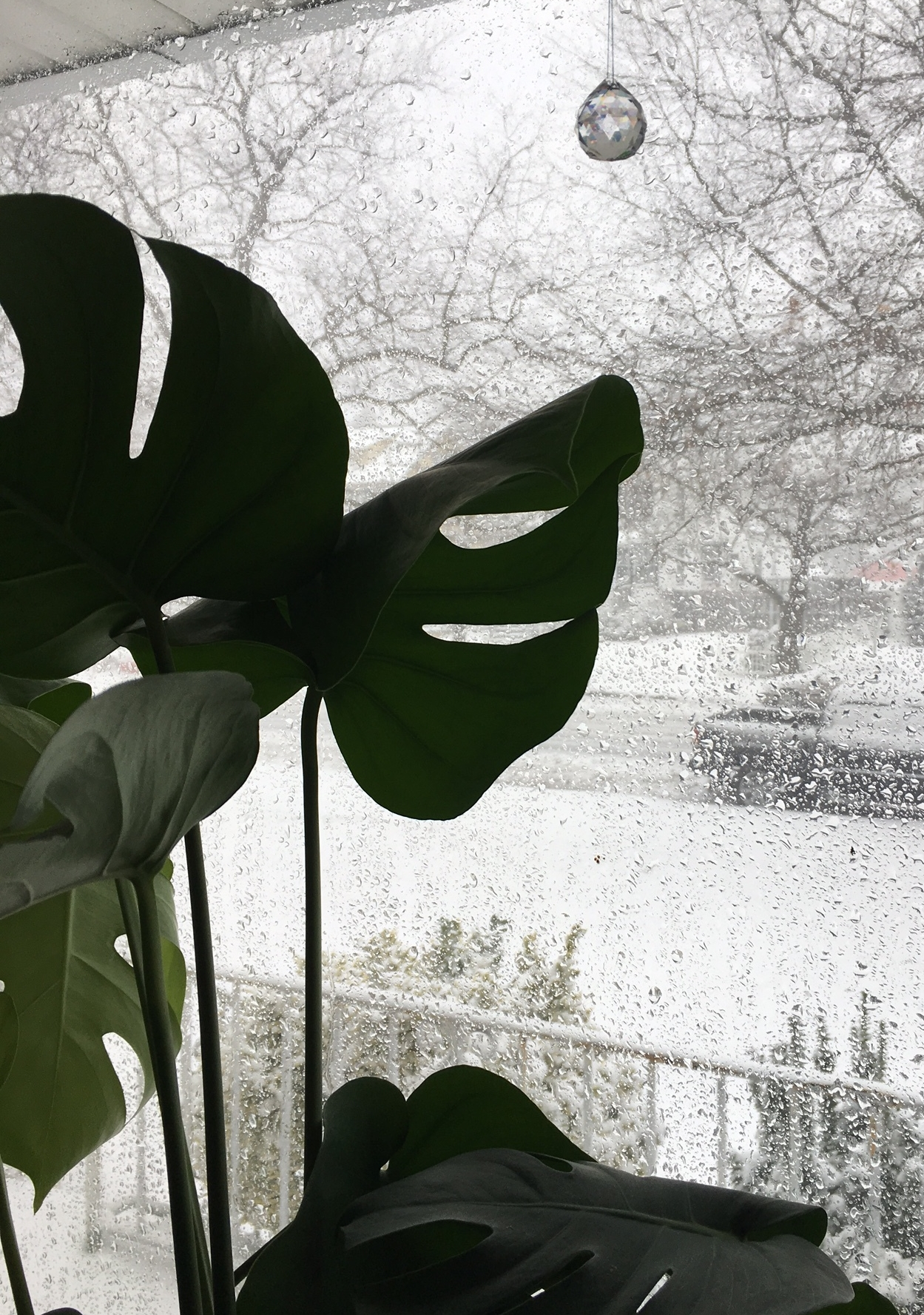 One of the best ways to view a snow storm is through the house plants.