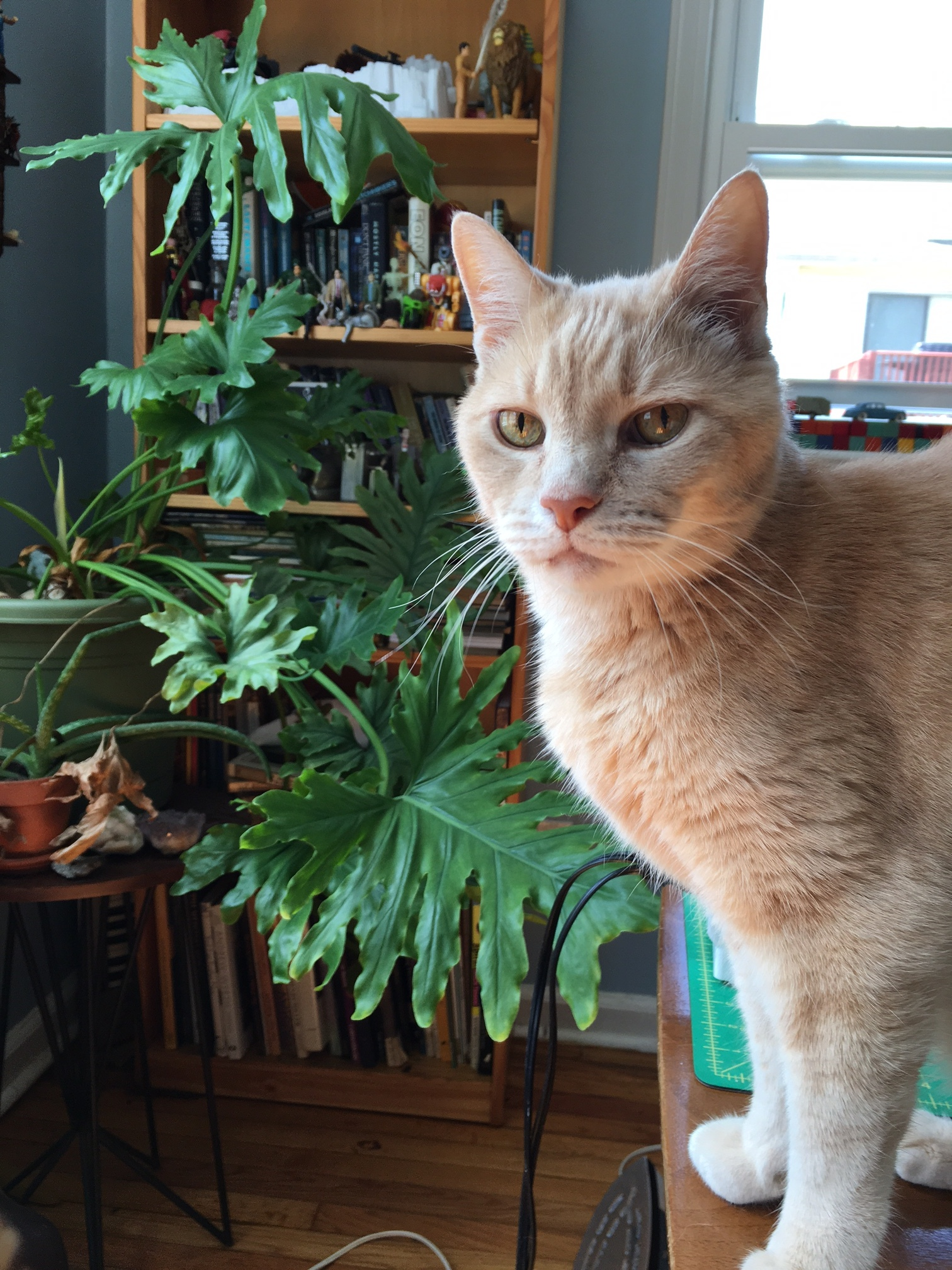 Tom taking care of the house plants!