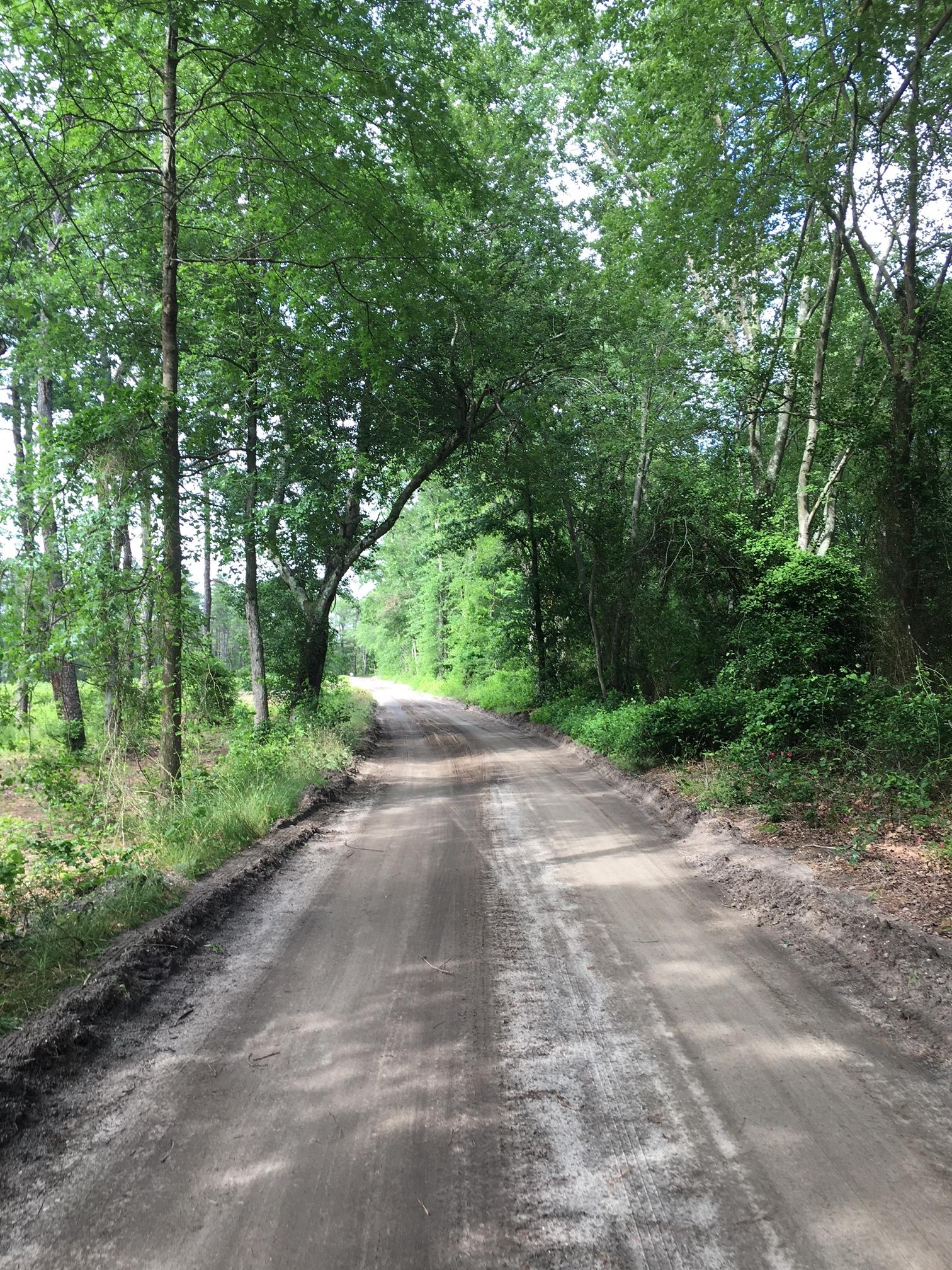 The long road in Whitesbog.