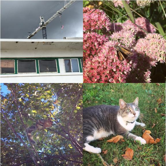 1) The Crane and Cat. 2) Skipper. 3) Neighbor. 4) New Friend.