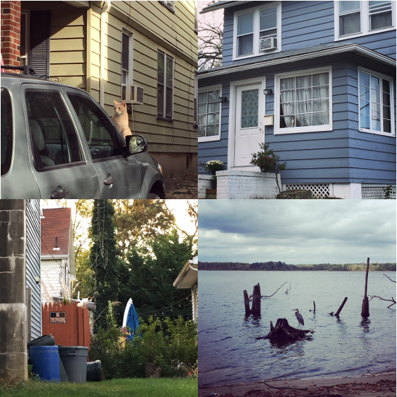 1) Car watcher, 2) Playful kittens, 3) On the fence, 3) Out to sea.