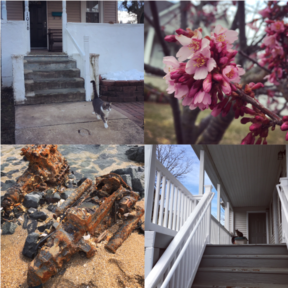 1) Big Boy's Spring return! 2) finally some blossoms! 3) Jersey Shore land speeders. 4) An aloof porch cat.