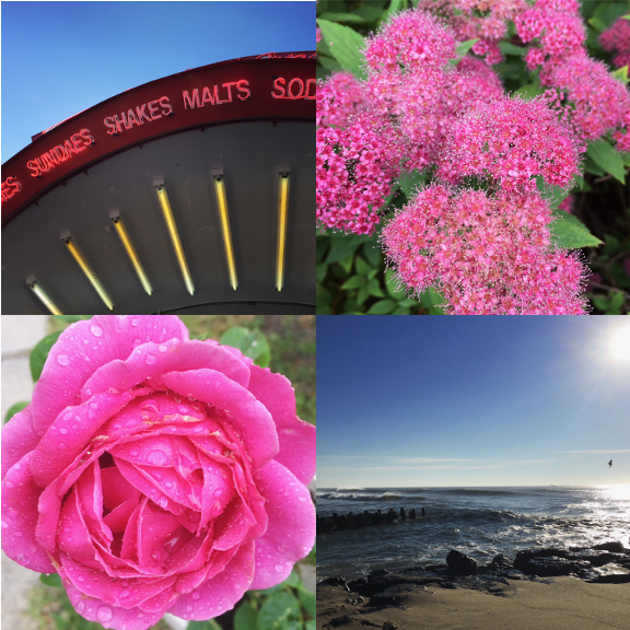 1) All the great signage. 2) Pink in Point Pleasant in NJ. 3) We replanted this rose and it had one big bloom. 4) Weekly challenge #1!