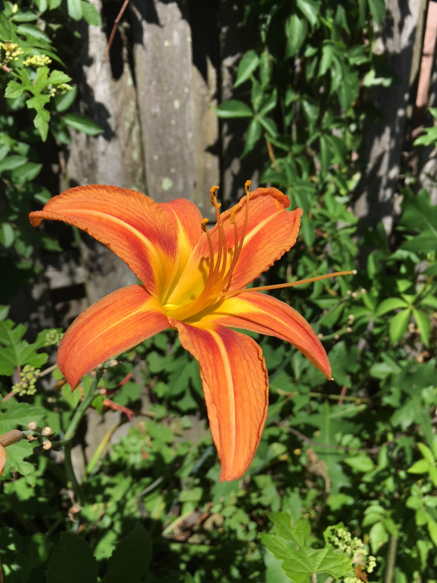 Love these day lilies that were here before we moved in.