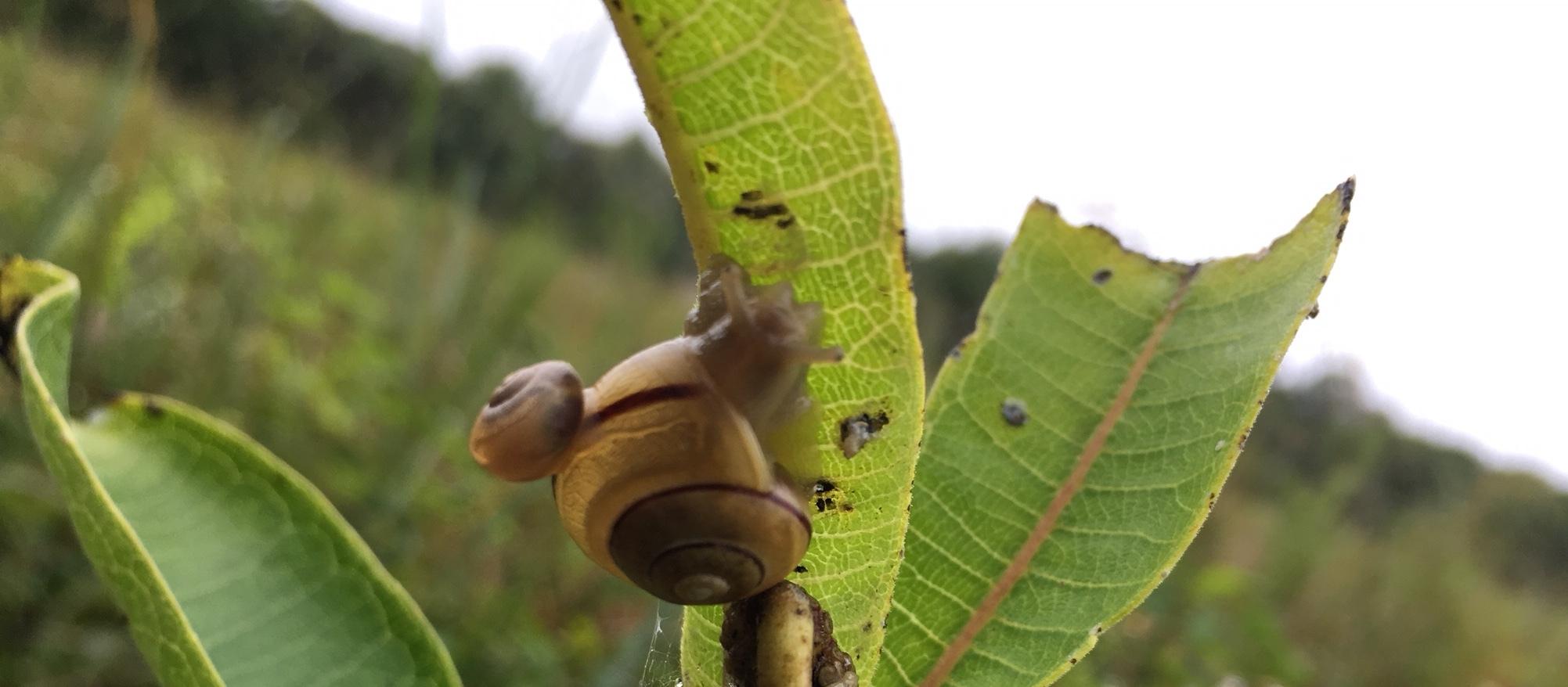 Snail on snail!