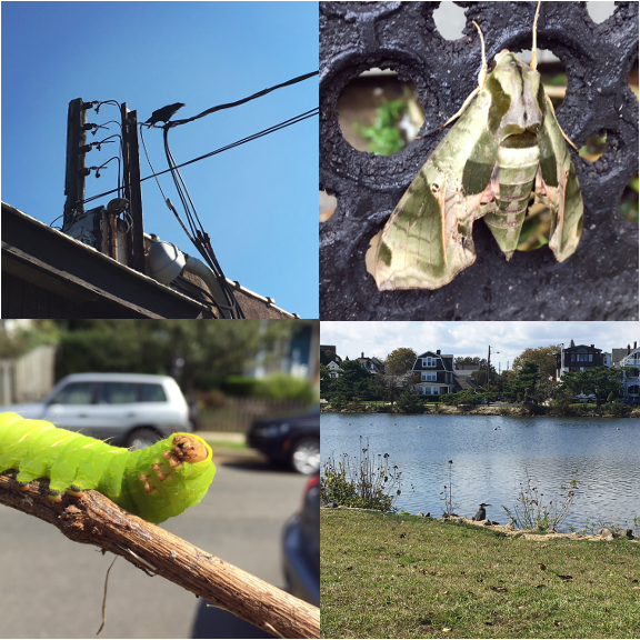1) This crow was loud. 2) This moth was huge! 3) This caterpillar was huger!! 4) This crane was pretty chill.