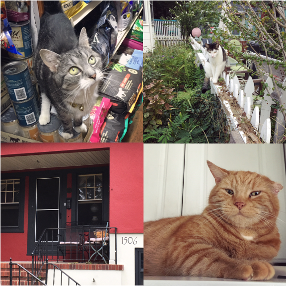 1) TWIX! 2) A lovely fence sitter. 3) Porch cat in Asbury Park, NJ. 4) Cat sitting for Garfield!
