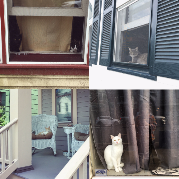 1) a duo of brothers, 2) one eye to lend, 3) relaxed on the porch, 4) a black and white friend.