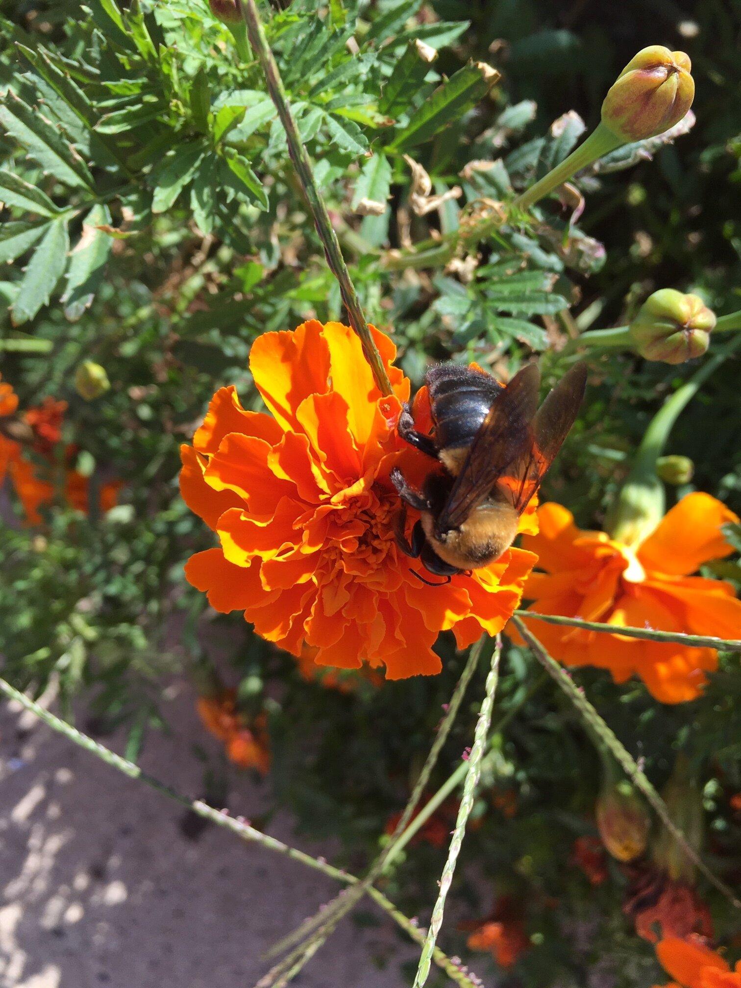 So many bees.