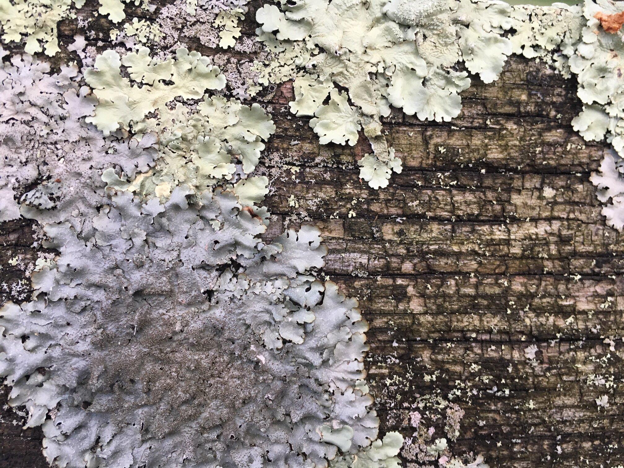 A fall feeling lichen.