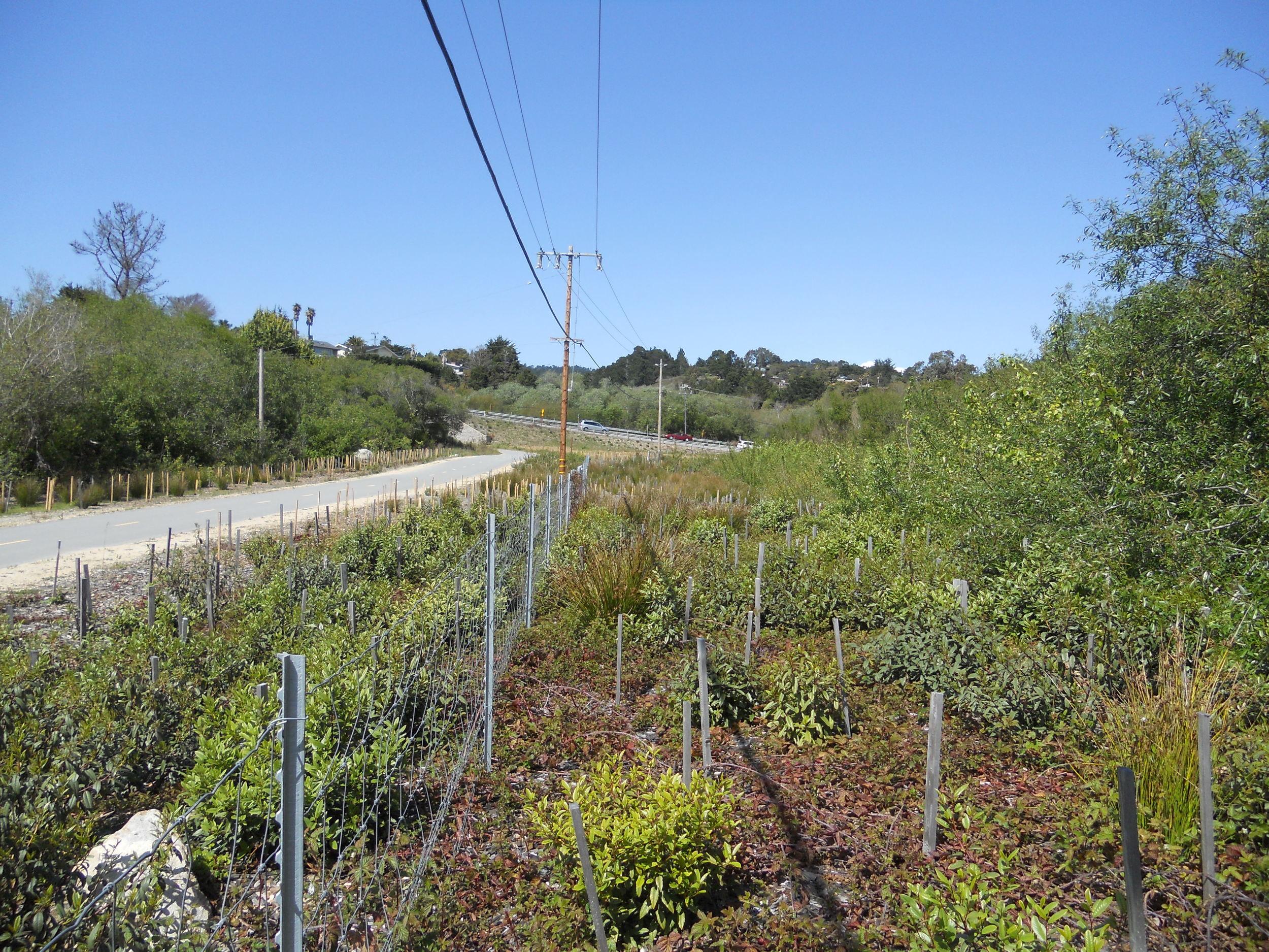 Carmel Hill and River Class I Bicycle Trail Riparian Restoration Progress (March 5, 2012)