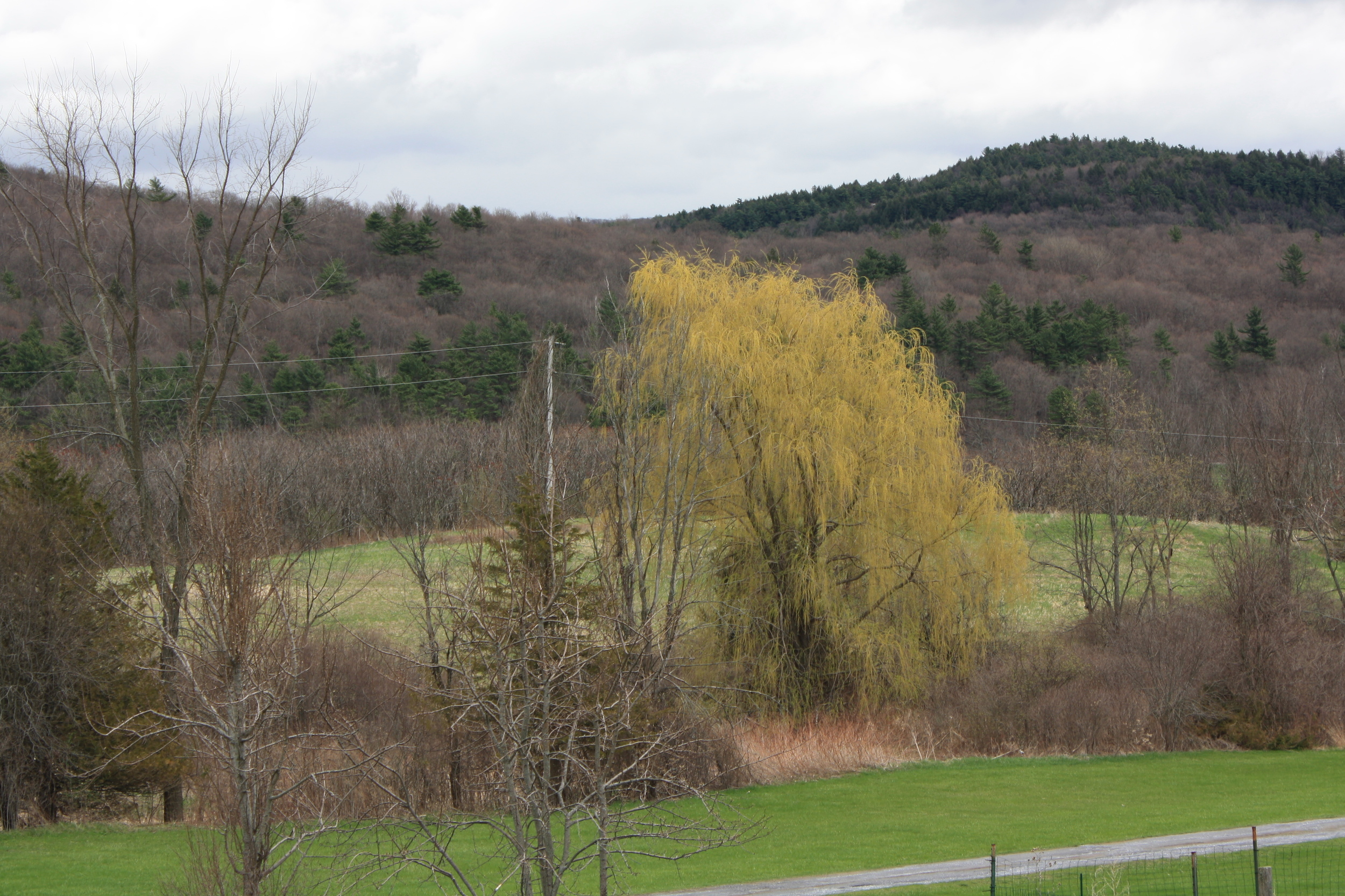 View from the window as I write this, May 4