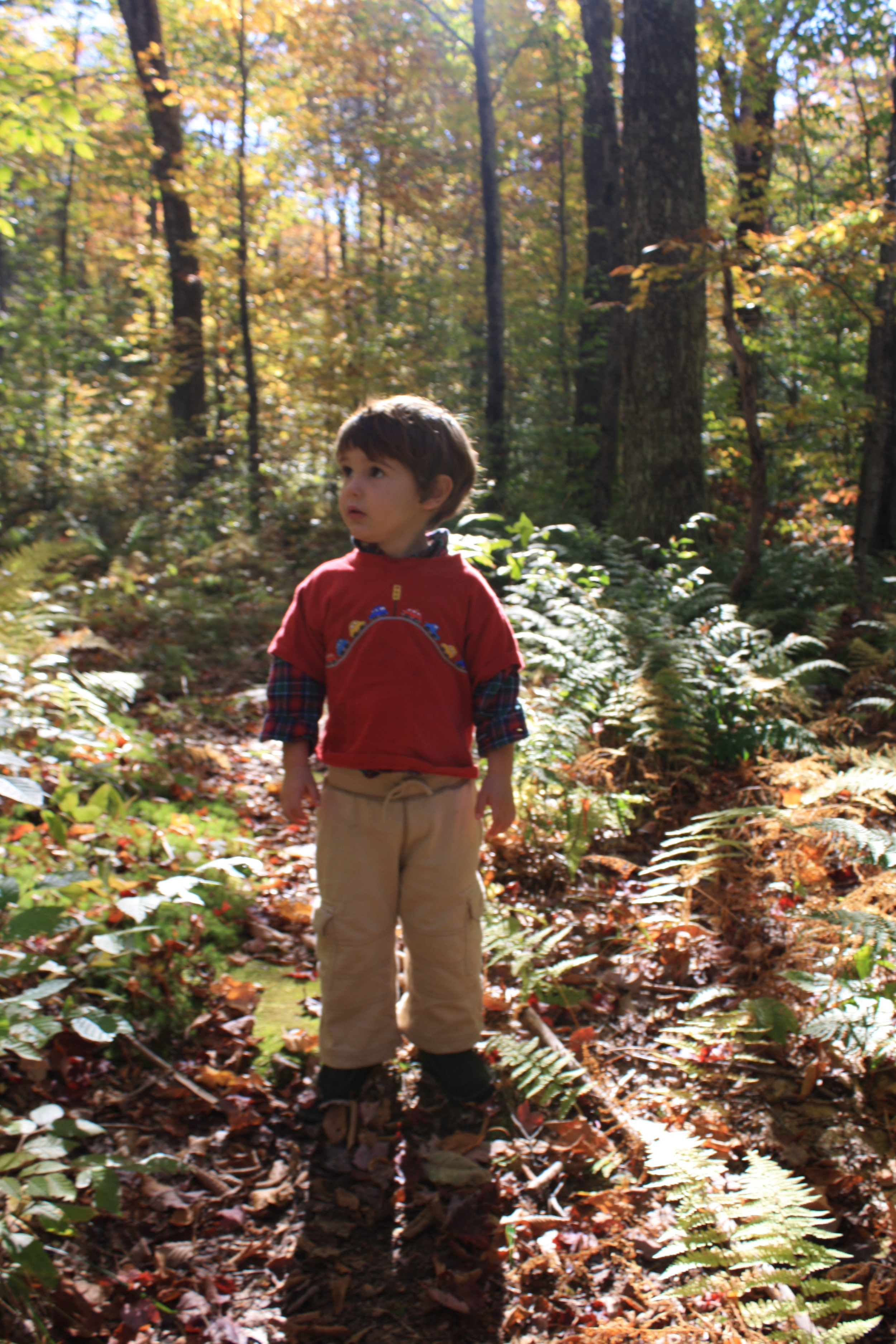 Check out my cute son Clark, aww he was so little then... as well as the understory... lots of dappled sun going on here.