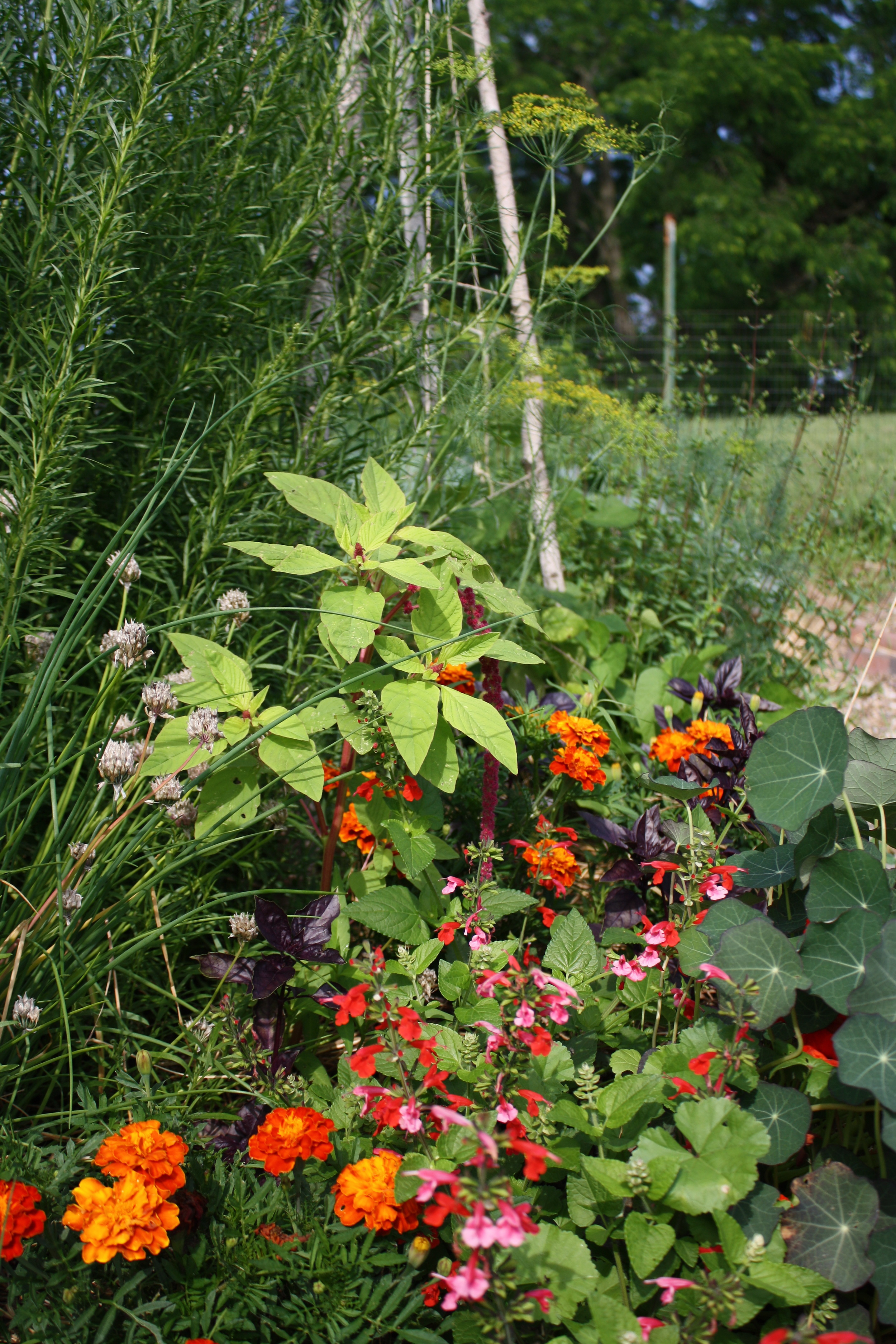july in the herb bed