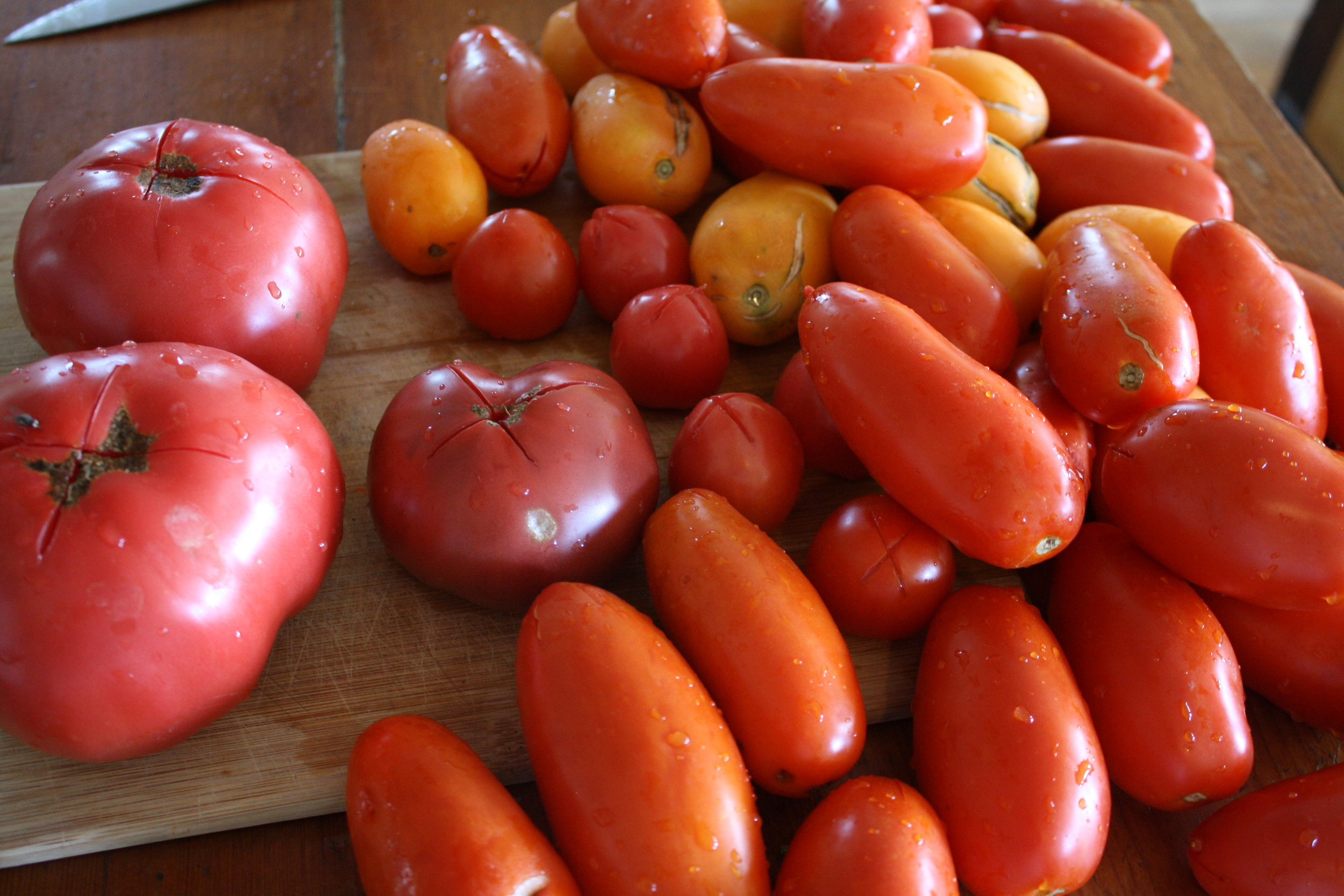 Tomatoes scored to be blanched and de-skinned for sauce