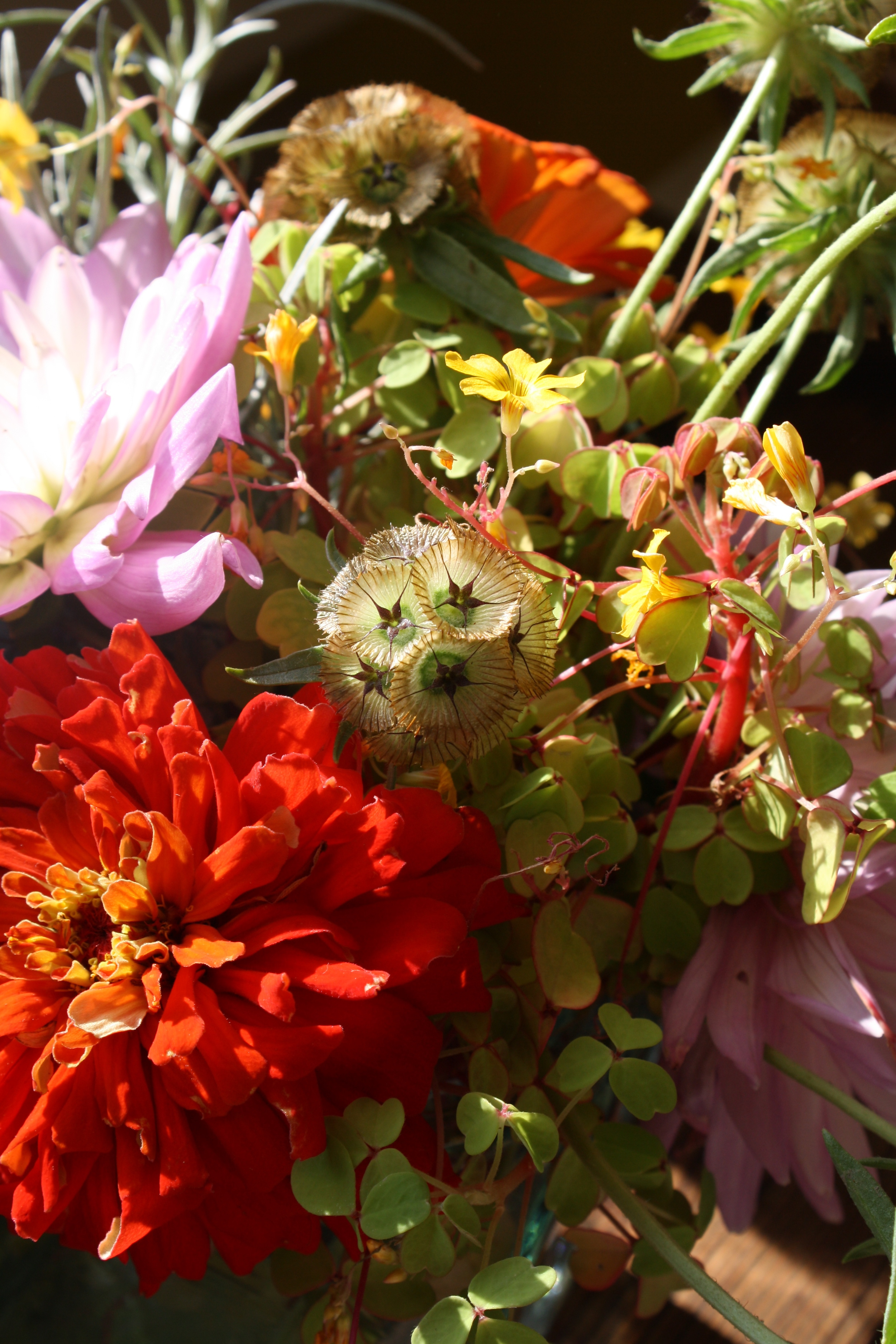 arrangement detail featuring 'Paper Moon' Scabiosa and 'Fireglow' Oxalis