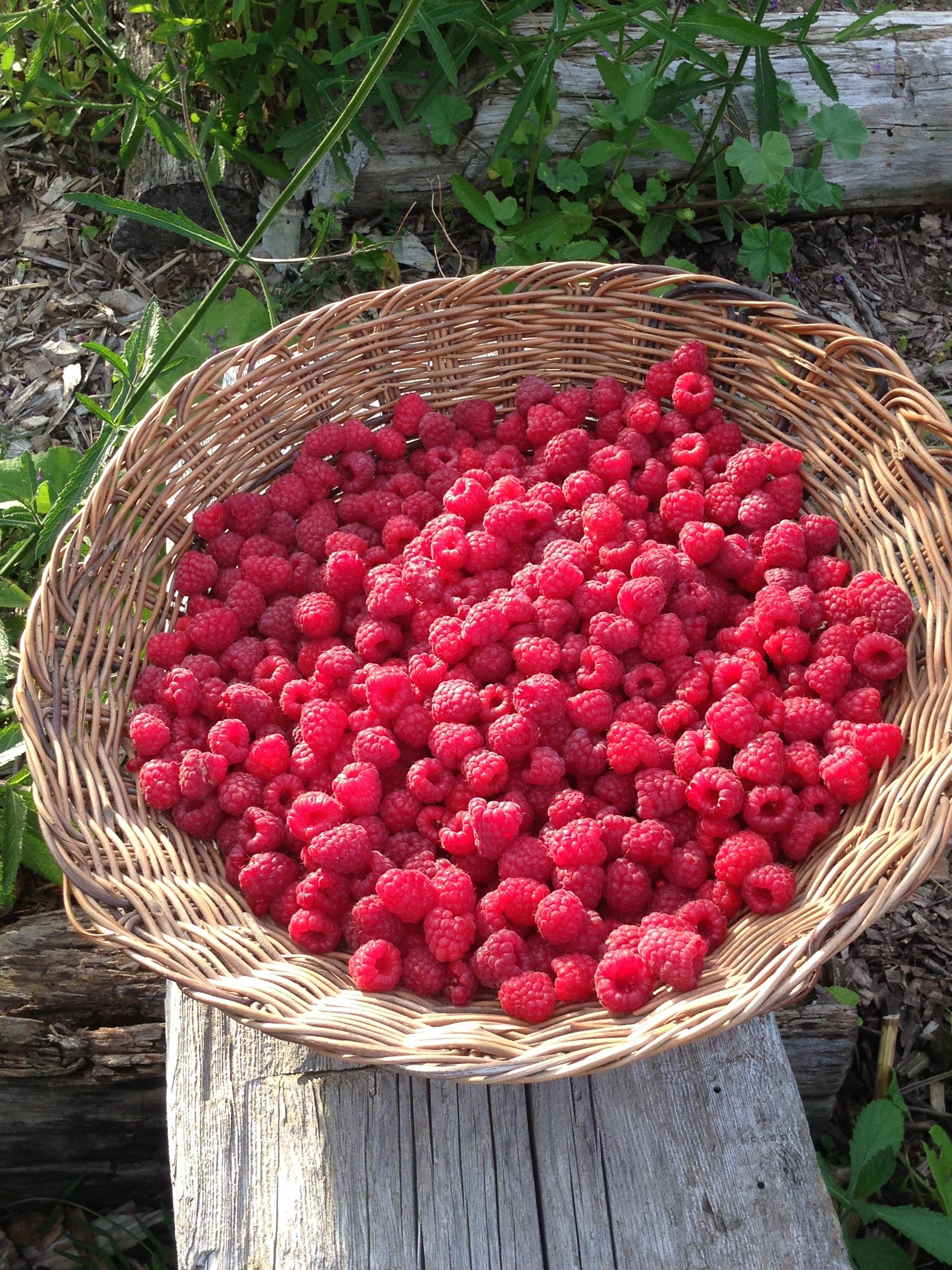 carolineraspberries.jpg