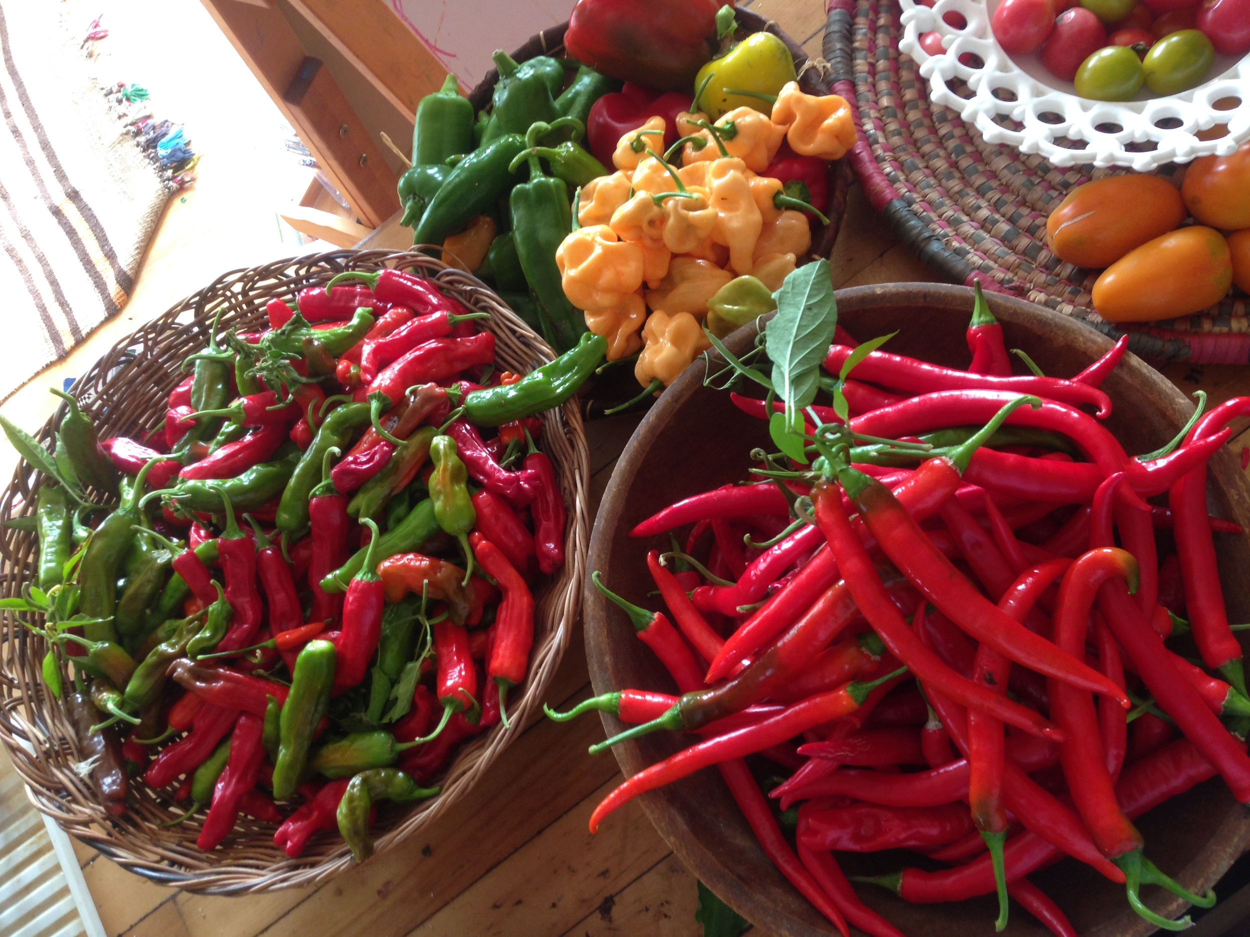 Shishito, Cayenne, Peach Habanero, Anaheim, and bell peppers for relish