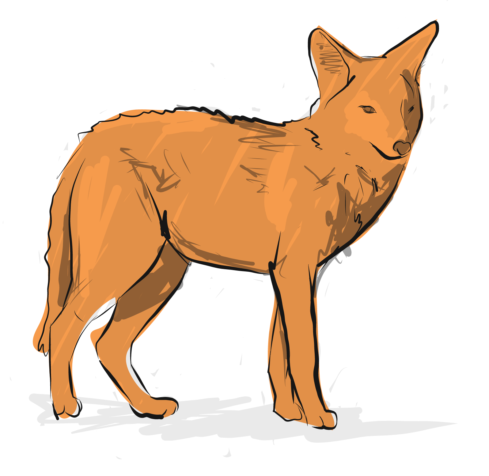 Coyote-01.png