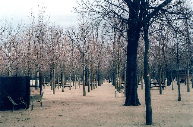Jardin Trees